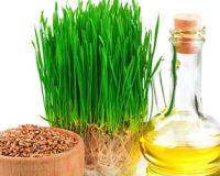 Уникальные свойства масла зародышей пшеницы
