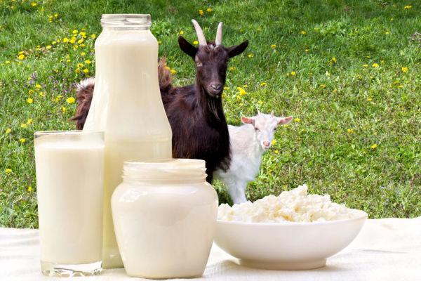 Вся правда о лечебных свойствах козьего молока