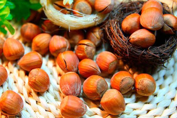 Фундук— ореховая польза для здоровья