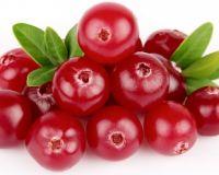 Осенняя «чудо-ягодка»— брусника