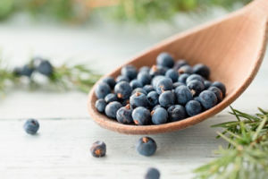 Можжевельник— волшебные синие ягоды, лучшее мочегонное средство