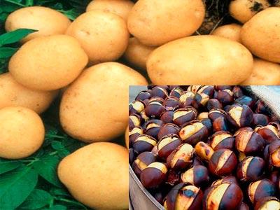 картофель и каштаны