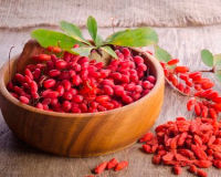 Ягода барбарис— уникальные, полезные свойства от листьев до корней