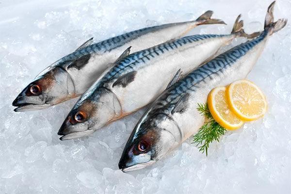Скумбрия, она же макрель: за что эту рыбу прозвали морской аристократкой