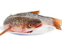 Пленегас— чем полезна эта рыбка? Оригинальный рецепт приготовления