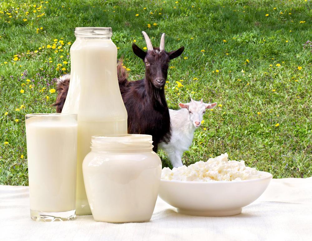 Все о пользе и вреде козьего молока для разных групп людей