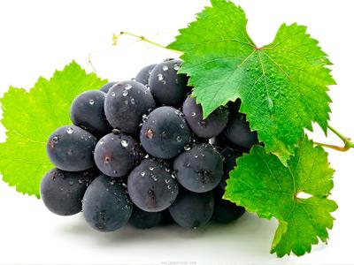 vinograd4