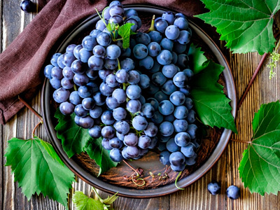 vinograd5