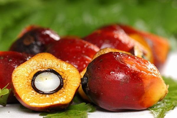плоды дерева
